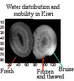 Water distribution and mobility in Kiwi