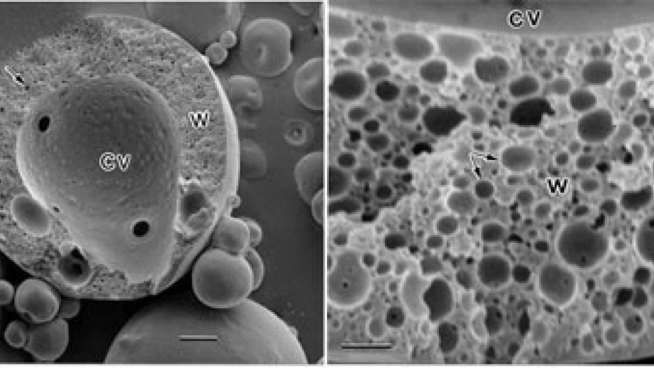 Microencapsulation in Food and Related Applications